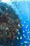podwodny swoboda wrak Obrazy Royalty Free
