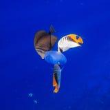 Podwodny taniec obraz royalty free