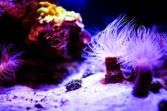 Podwodny, Podwodny ?wiat, rafa koralowa obrazy stock
