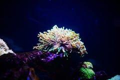 Podwodny, Podwodny ?wiat, rafa koralowa fotografia royalty free