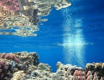 Podwodny ?wiat w g??bokiej wodzie w rafie koralowej i ro?linach kwitnie flory w b??kitnej ?wiatowej morskiej przyrodzie, ryba, ko obrazy stock