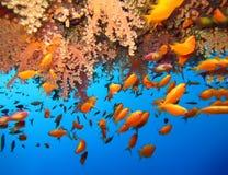 Podwodny ?wiat w g??bokiej wodzie w rafie koralowej i ro?linach kwitnie flory w b??kitnej ?wiatowej morskiej przyrodzie, ryba, ko zdjęcia stock