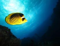 Podwodny ?wiat w g??bokiej wodzie w rafie koralowej i ro?linach kwitnie flory w b??kitnej ?wiatowej morskiej przyrodzie, ryba, ko zdjęcie stock