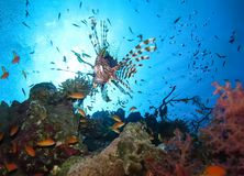 Podwodny ?wiat w g??bokiej wodzie w rafie koralowej i ro?linach kwitnie flory w b??kitnej ?wiatowej morskiej przyrodzie, ryba, ko fotografia stock