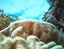 Podwodny ?wiat w g??bokiej wodzie w rafie koralowej i ro?linach kwitnie flory w b??kitnej ?wiatowej morskiej przyrodzie, ryba, ko zdjęcia royalty free