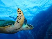 Podwodny ?wiat w g??bokiej wodzie w rafie koralowej i ro?linach kwitnie flory w b??kitnej ?wiatowej morskiej przyrodzie, rybie, k zdjęcia stock