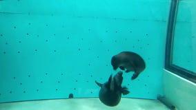 Podwodny świat w oceanarium zdjęcie wideo