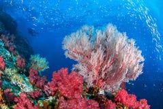 Podwodny światowy Similan Tajlandia Obrazy Stock