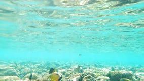 Podwodny widok morze Z rafą koralowa, ryba I słońce promieniami, zbiory