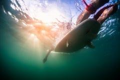 Podwodny widok osoba na desce obrazy stock
