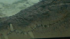 Podwodny widoku krokodyla usta, zoo scena zbiory