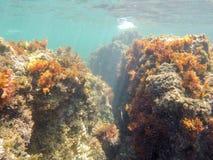 Podwodny wizerunku Lasu Rotas rezerwat przyrody Denia Alicante Hiszpania obrazy stock