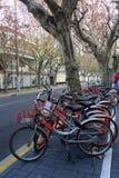 Podzieleni rowery na stronie droga Obraz Royalty Free