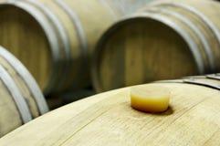 Podziemny wino loch z rzędami drewniane baryłki 5 Obraz Royalty Free