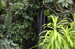 Podzwrotnikowe ogrodowe rośliny Zdjęcie Stock
