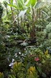 Podzwrotnikowe ogrodowe rośliny Fotografia Stock