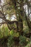 Podzwrotnikowy las w Nepal fotografia royalty free