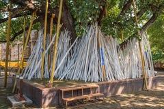Poe-traditionskryckor, chiangmai, Thailand Arkivbilder