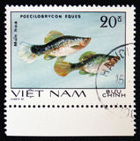 Poecilobrycon eques, series `Aquarium Fish`, circa 1980 Stock Photo