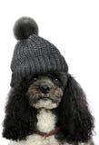 Poedel met bobble hoed Royalty-vrije Stock Foto's