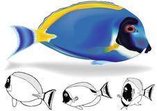 Poeder Blauw Tang Set stock illustratie