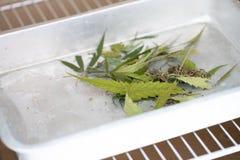 Poeder van Cannabis ( Drugs) voor een Witte achtergrond, voor Analyse in laboratorium stock afbeeldingen