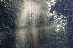 A poeira nevado feericamente imagem de stock royalty free