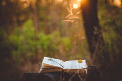 Poesiebuch unter Baum Lizenzfreies Stockfoto