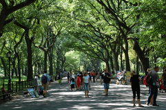 Literary Walk in Central Park, New York City. American elm trees arch over the wide cobbled path of the Poet's Walk in Central Park in New York City. Tourists Royalty Free Stock Image