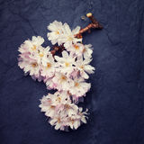 Poetic spring flowers with a piece of old timber Royalty Free Stock Image