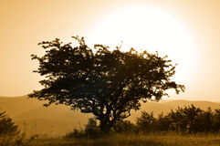 Poetic tree. Single hawthorn tree - autumn melancholy colors of creations Royalty Free Stock Photo