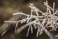 Poetic winter Stock Photography