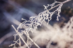 Poetic winter Royalty Free Stock Image