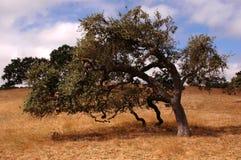 poetisk oak Royaltyfria Bilder