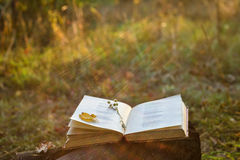 Poetry book. With fallen leaf and flower on it royalty free stock image