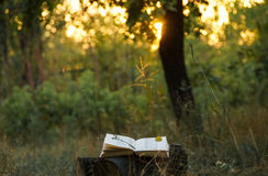 Poetry book under tree. And blurs of summer sunset background royalty free stock photo