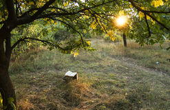 Poetry book under tree. In front of sunset royalty free stock image