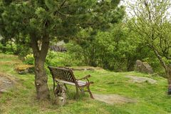 The poets hideout. Garden bench standing empty beneath a pine tree in a serene garden, very poetic and inspirational Royalty Free Stock Image
