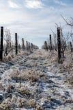 pogórzy wzgórza kształtują teren linie dwa wioski winnicy zima Zdjęcie Stock