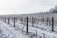 pogórzy wzgórza kształtują teren linie dwa wioski winnicy zima Obrazy Royalty Free