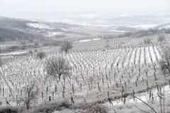 pogórzy wzgórza kształtują teren linie dwa wioski winnicy zima Zdjęcia Royalty Free