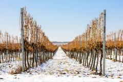 pogórzy wzgórza kształtują teren linie dwa wioski winnicy zima Obraz Stock