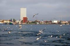 Pogoda jesieni fala, wiatr i latań seagulls na Klaipeda porcie -, Obrazy Royalty Free