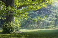 Pogodna łąka obrazy royalty free