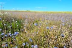 Pogodna łąka Obraz Royalty Free