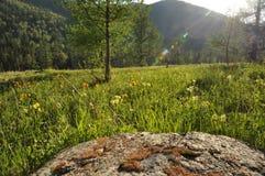 Pogodna łąka w górach Obraz Stock