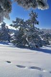 pogodna dzień zima Fotografia Stock