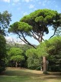 Pogodna halizna na tle góra Petri Vorontsov park obraz royalty free