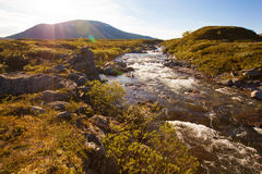 Pogodna krajobrazowa Norwegia gór Dovrefjell rzeka Obraz Royalty Free