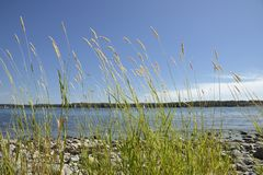 Pogodna plaża z ostrością na trawie i niebieskim niebie obrazy royalty free